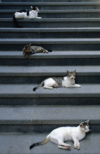 Cats lying on steps, Santa Marina Salina, Italy