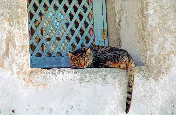 Cats of Greece:  A Tom Cat Sleeping on a Window Si
