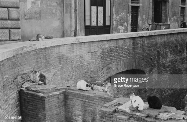 Cats on a wall in Milan Italy November 1951 Original publication Picture Post 5672 Miss Bluebell Takes Her Girls To Italy pub 9th February 1952