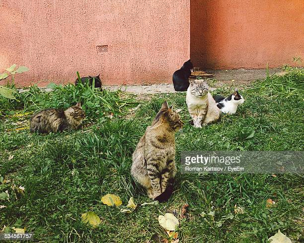 Cats On Grassy Field Against Wall
