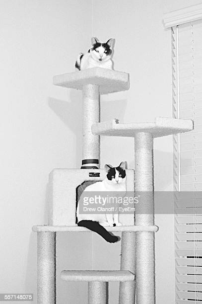 Cats On Kitty Tower