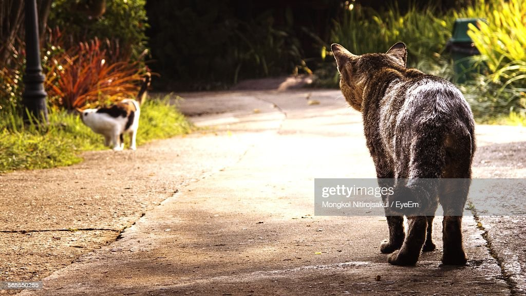 Cats On Road : Stock Photo