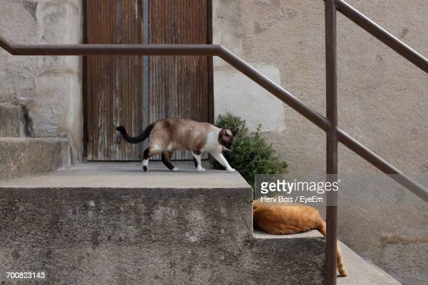 Cats On Steps By Wall Outside House