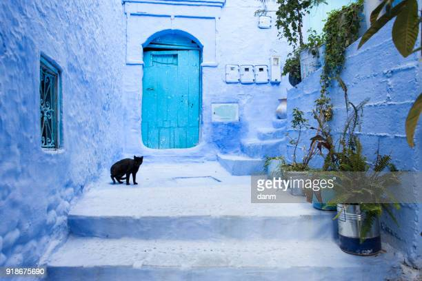 cats on street in medina of blue town chefchaouen, morocco - chefchaouen photos et images de collection