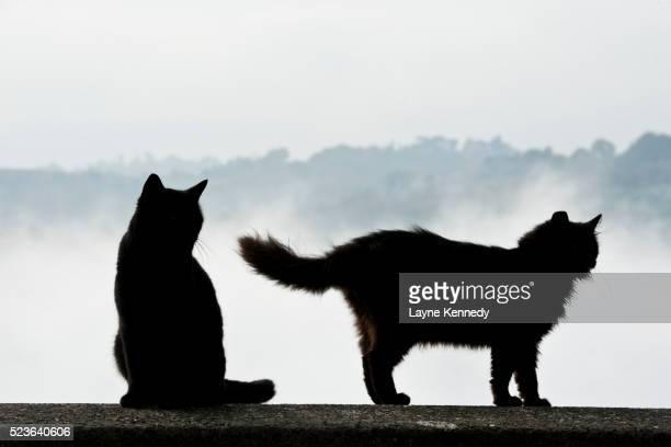 Cats, Orvieto, Italy