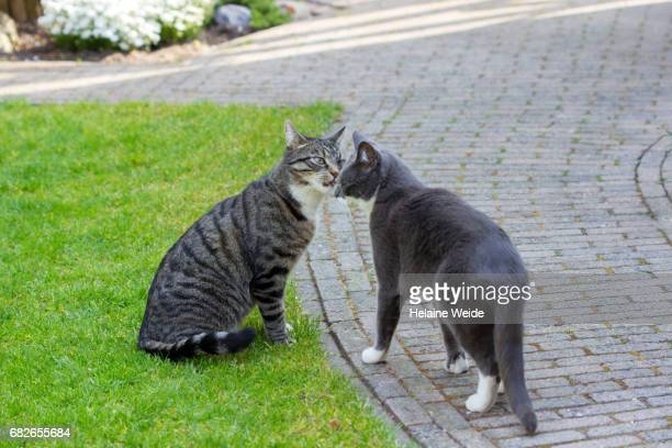 cats playing in a formal garden