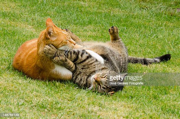 Cats playing in garden
