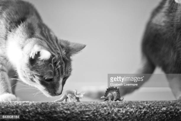 Cats playing with toy dinosaurs