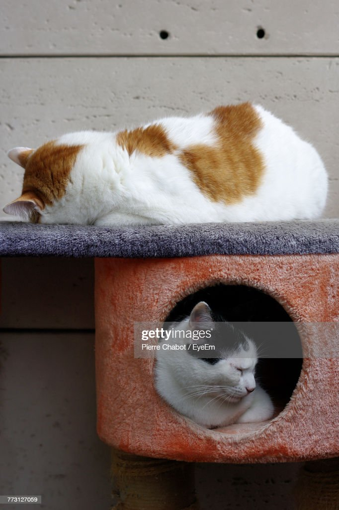 Cats Resting On Scratch Pole By Wall : Photo