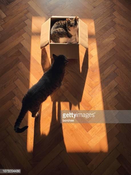 猫の影。 - モバイル撮影 ストックフォトと画像