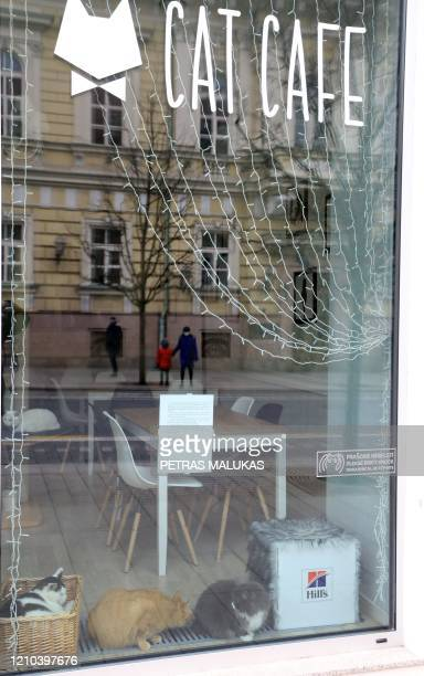 """Cats sit behind the window of the """"Cat Cafe"""" which remains closed in Vilnius, Lithuania on April 19 amid the new coronavirus COVID-19 pandemic. - In..."""