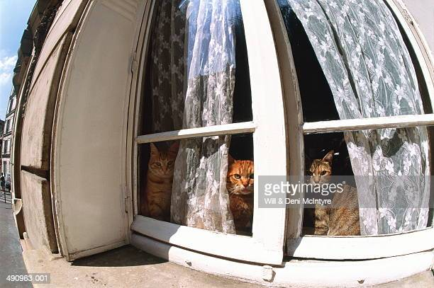 cats sitting in window of house, exterior view (wide angle) - kitty mcintyre stock pictures, royalty-free photos & images