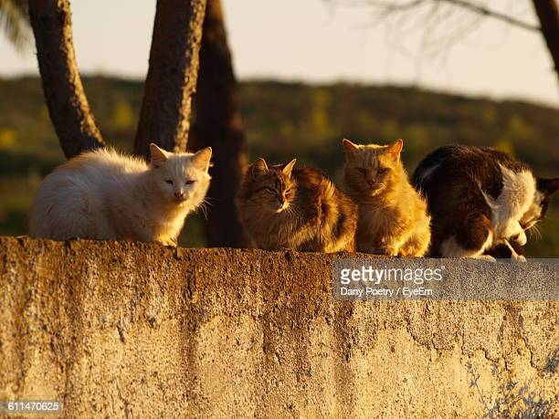 Cats Sitting On Retaining Wall