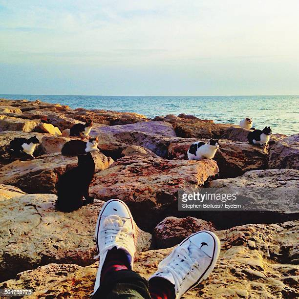 Cats Sitting On Rock At Seaside