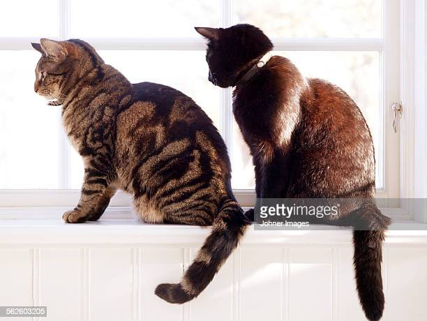 Cats sitting on windowsill