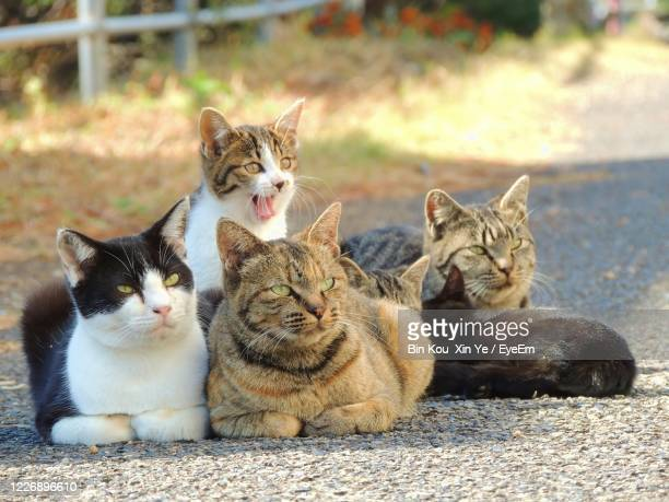 cats sitting - medium group of people stock pictures, royalty-free photos & images