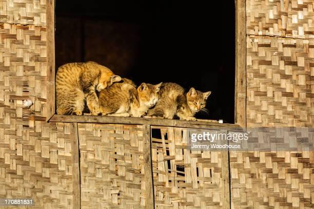 Cats sleeping in window