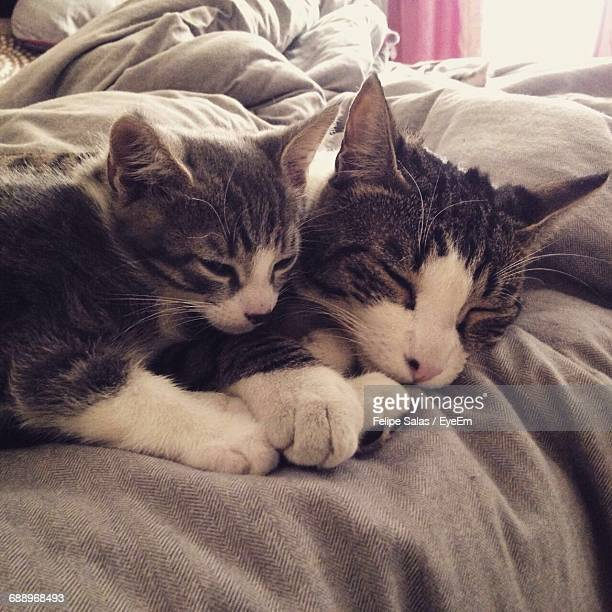 Cats Sleeping On Bed