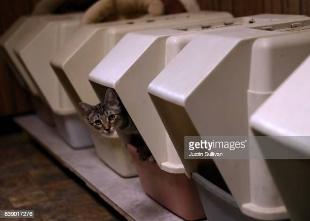A cats steps out of a litter box at The Cat House on the Kings on August 25 2017 in Parlier California The Cat House on the Kings is California's...