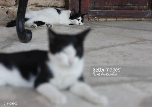 Cats take their afternoon nap at the monastery of Saint Nicholas of the Cats in southwestern Cypriot village of Akrotiri on August 3 five days ahead...