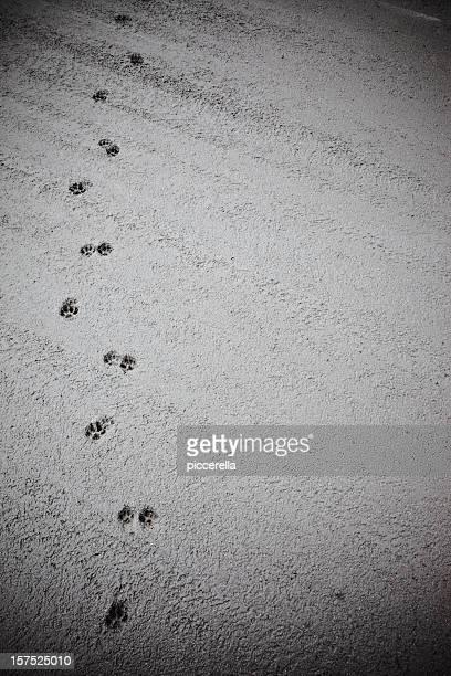 Cat's track