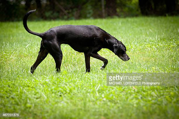 cats vs. dogs - hound stock pictures, royalty-free photos & images