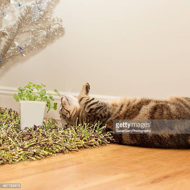 cats vs. dogs - catmint stock pictures, royalty-free photos & images