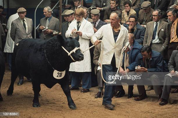 Cattle are assessed by farmers and traders at a livestock market Perth Scotland November 1977