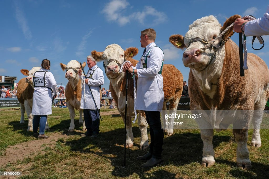 Cattle are paraded around the arena as judging takes place in the Beef Classes during the second day of the 160th Great Yorkshire Show on July 11, 2018 in Harrogate, England. First held in 1838 the show brings together agricultural displays, livestock events, farming demonstrations, food, dairy and produce stands as well as equestrian events. The popular agricultural show is held over three days and celebrates the farming and agricultural community and their way of life.