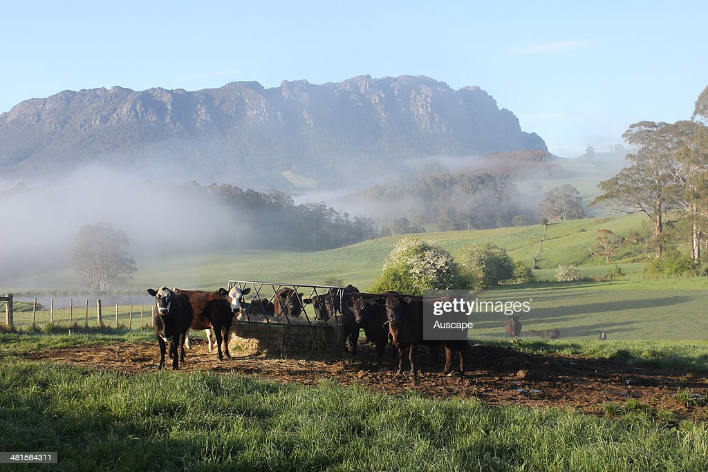 flooring wider farm hay first orig two summary img fenceline panels feeding than cows feeder this system also and shale blog the slightly feeders is cattle next feed wooden for geogrid has eden
