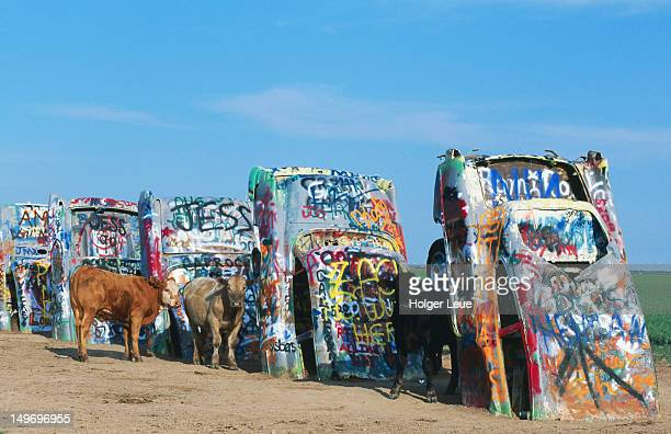 Cattle at Cadillac Ranch.