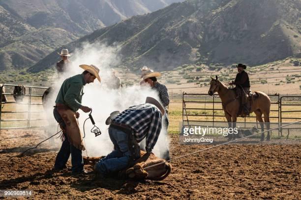 アメリカ西部のカウボーイによって、ブランド牛 - 家畜柵 ストックフォトと画像