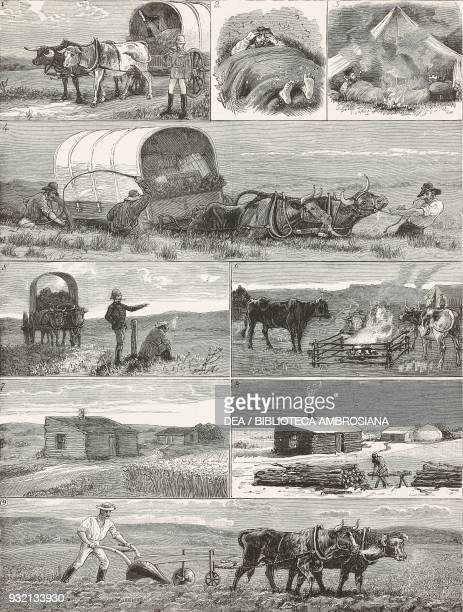 Cattle breeding and agriculture emigrants in Manitoba Canada illustration from The Graphic volume XXVIII no 722 September 29 1883