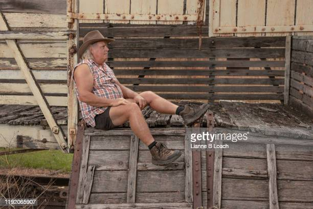 cattle class - lianne loach stock pictures, royalty-free photos & images