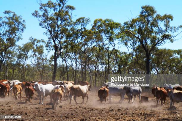 cattle country - ranch stock pictures, royalty-free photos & images