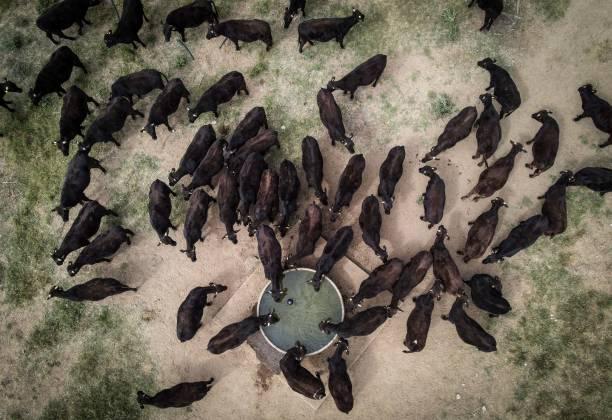 AUS: Cattle Farm As Farming in Australia Faces Slowdown Following Bumper Year