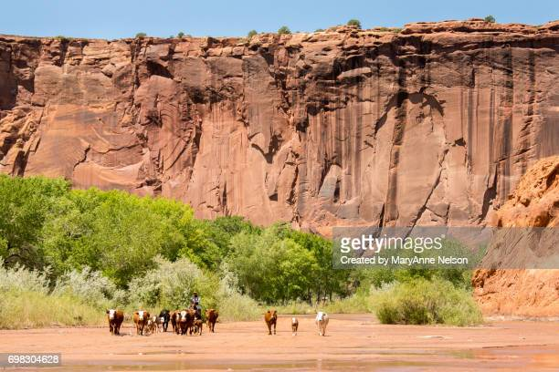 Cattle Drive in Canyon de Chelly