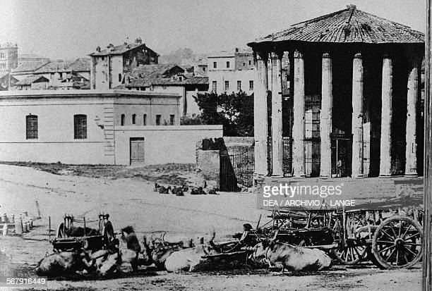 Cattle drovers near the Temple of Vesta or Hercules Victor photograph by Count Primoli Italy 19th century