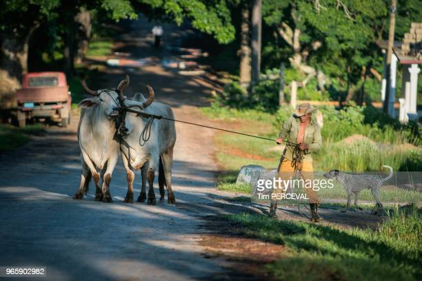 Cattle Farmer Vinales