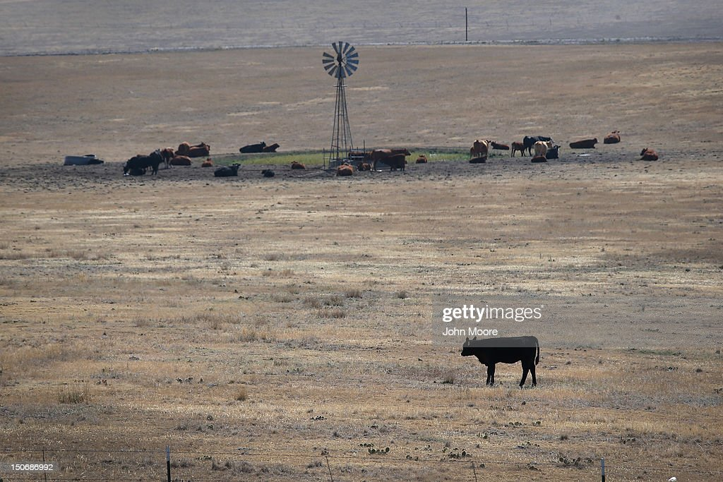 Cattle gather near a windmill-fed water tank on drought-ravaged grassland on August 21, 2012 near Hugo, Colorado. The severe drought has dried up most of eastern Colorado's natural grassland, forcing many ranchers to sell off much of their livestock to feedlots, which fatten up the cattle for slaughter. More than 50 percent of high plains areas of eastern Colorado, Nebraska and Kansas are still in extreme or exceptional drought, despite recent lower temperatures, according to the University of Nebraska's Drought Monitor. The record-breaking droughtr, which has affected more than half of the continental United States, is expected to drive up food prices by 2013 due to lower crop harvests and the adverse effect on the nation's cattle industry.