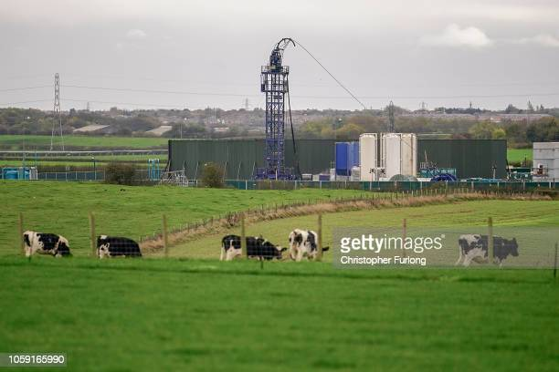 Cattle graze next to the Preston New Road drill site where energy firm Cuadrilla Resources have recommenced fracking operations to extract shale gas...