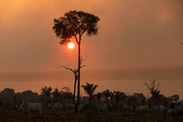 BRA: Fire In The Amazon Rainforest