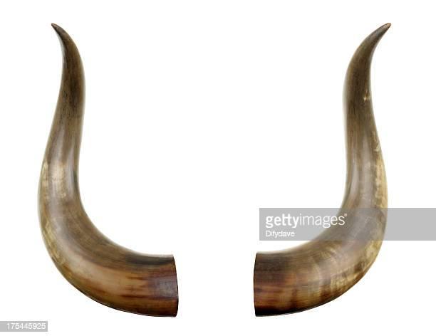 bovino horns isolato su bianco - cornuto foto e immagini stock
