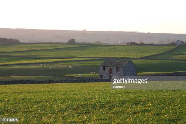 cattle meadows