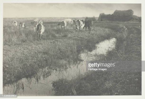 Cattle on the Marshes, 1886. A work made of platinum print, pl. Xxx from the album 'life and landscape on the norfolk broads' ; edition of 200....