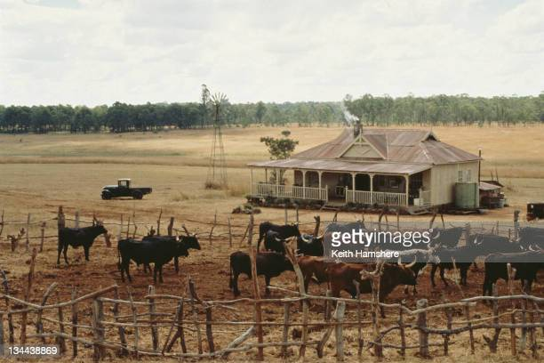 A cattle ranch in the Transvaal from the film 'The Power of One' 1992