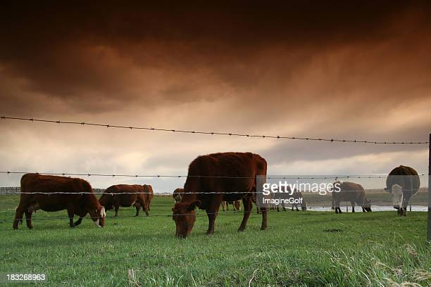 Cattle Ranching Industry