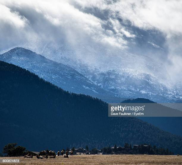 Cattle Relaxing On Field Against Mountains