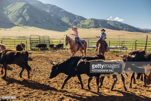 Cattle roping in Utah