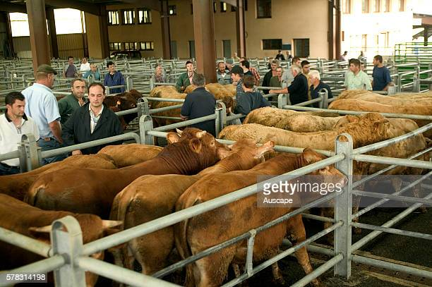 Cattle sale yard with buyers and farmers Mauriac Cantal Auvergne Massif Central France